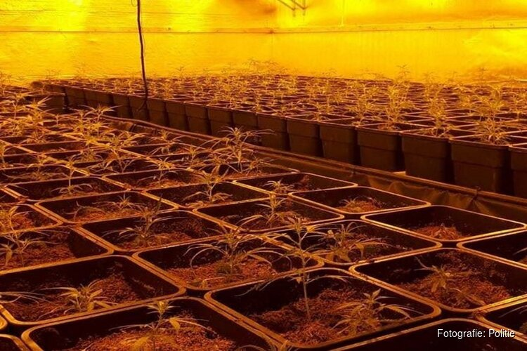 Hennepkwekerij met 850 planten ontdekt
